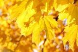 Золотая осень в группе «Пчелки»